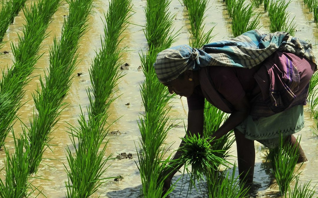 Cauvery good news: A farmer explains how delta can get back to three crops