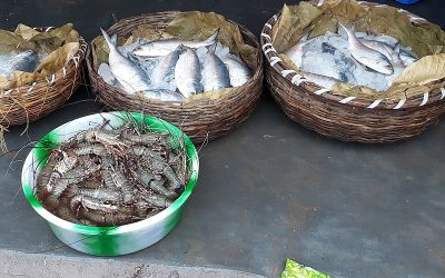 Formalin: Fishermen point to mischief by merchants, warn against scare-mongering