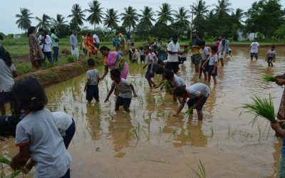 MNC executive-turned farmer gives tips on how to succeed in agriculture